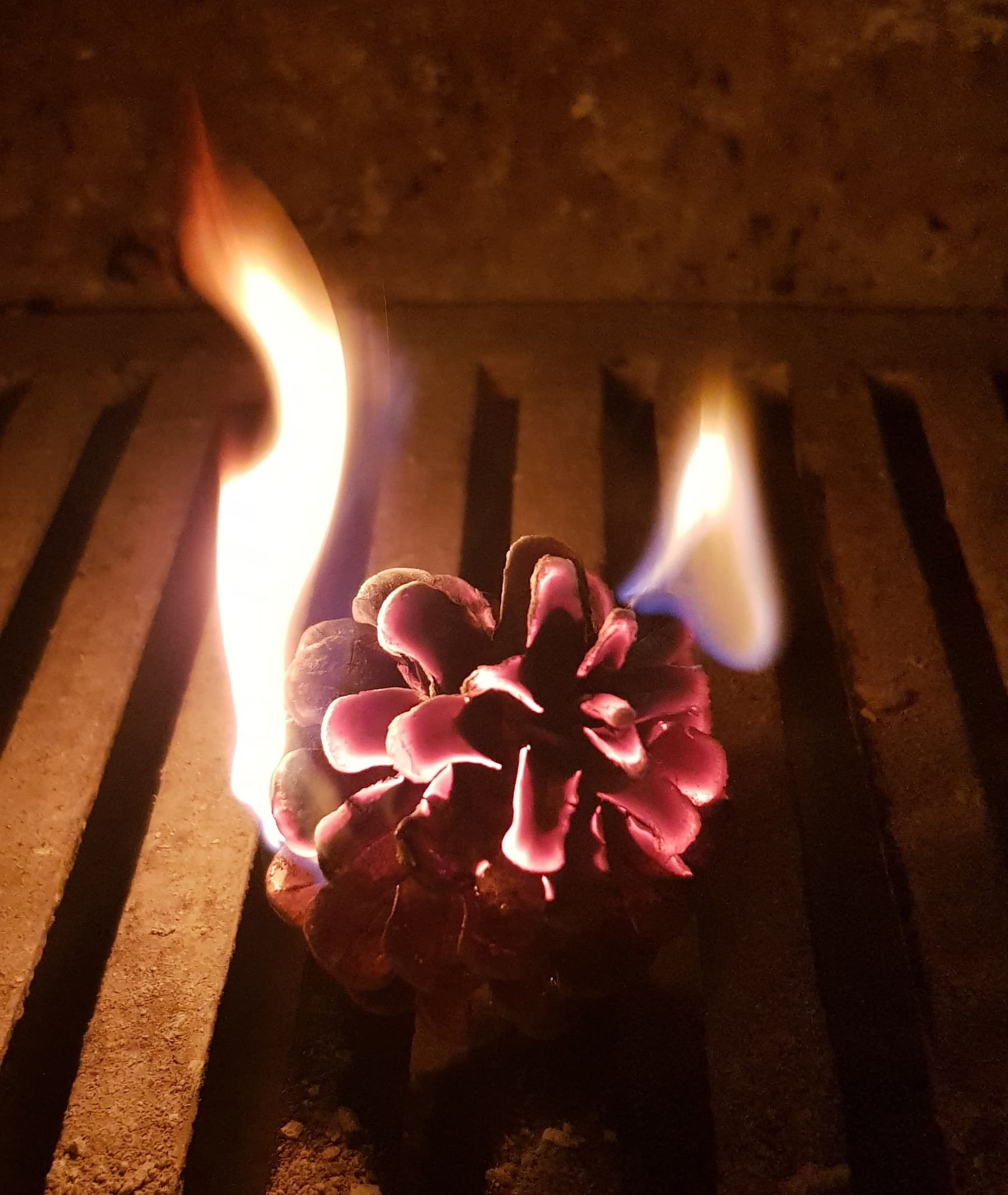 POH – Pinecone Firelighters #1